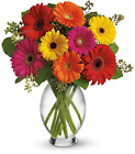Teleflora's Gerbera Brights from Designs by Dennis, florist in Kingfisher, OK